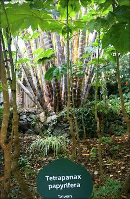 Botanická zahrada La Mortella a výběžek Zaro.